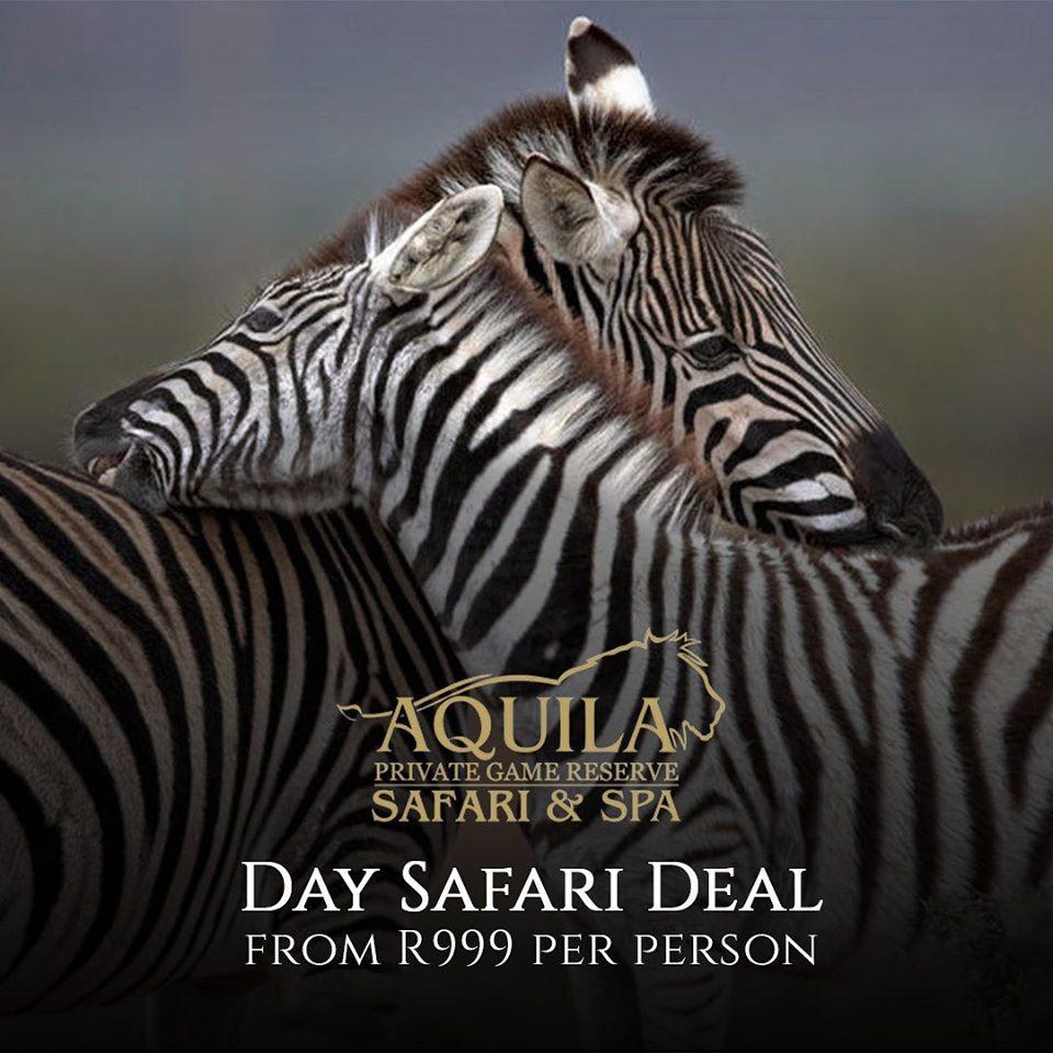 Aquila Day Safari Promo