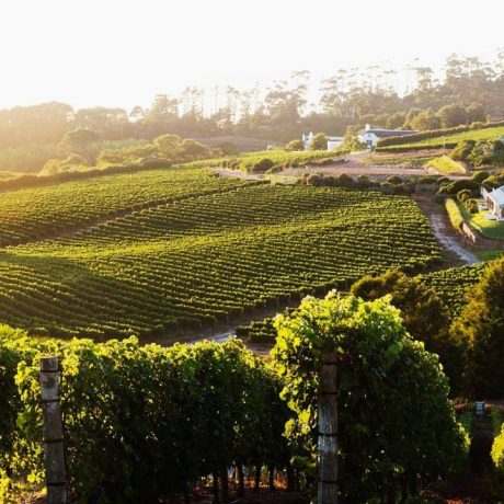 THE FINEST HOP-ON HOP-OFF WINE EXPERIENCE