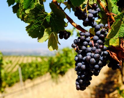 Pouring with pride- SA's wine industry celebrates its official 362nd birthday