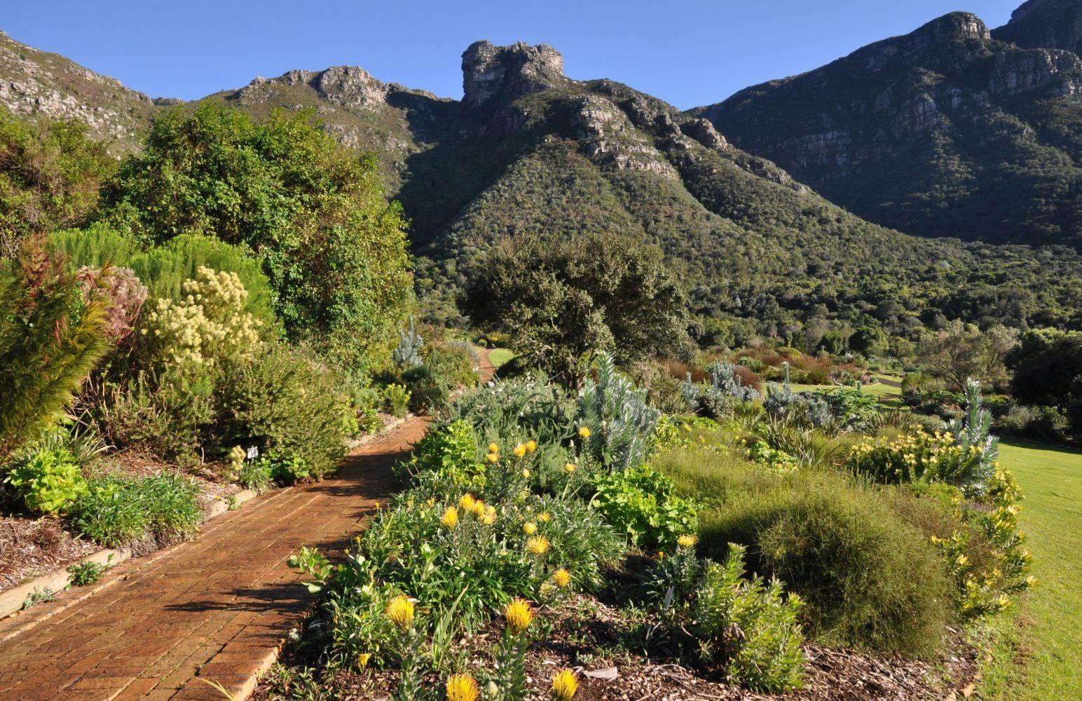 Enjoy the Winter Wonders of Kirstenbosch